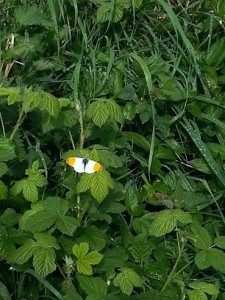 Walking in Shropshire - butterfly - walking & wine