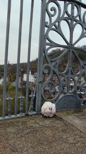 sheep-at-ironbridge-walking-in-shropshire-walking-and-wine
