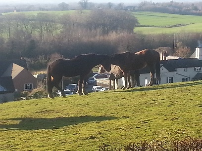 Walking in Shropshire - Nesscliffe horses - walking & wine
