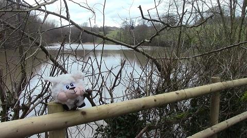 Walking in Shropshire - Sheep lake - walking & wine