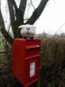 walking in shropshire - Post Box - sheep - Albrighton - walking & wine