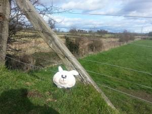 walking in shropshire - sheep railway bridge - walking & wine